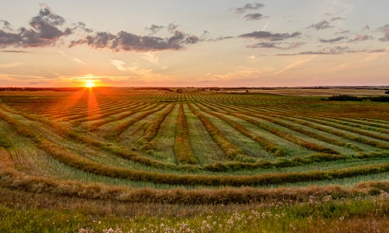 Harvest time by Steve Ricketts